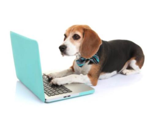 Επικοινωνία - dogswisdom.com.gr